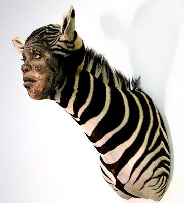 zebra kate clark